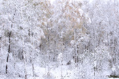 Wood in a snow. Winter. Royalty Free Stock Photos