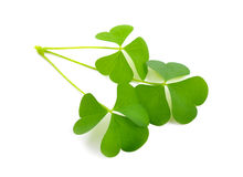 Wood-sorrel leawes Stock Photos