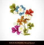 Wood Sorrel, Wild flower. Royalty Free Stock Photos