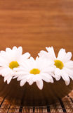 Wood spa. Bowl with flowers om wood background Royalty Free Stock Photos