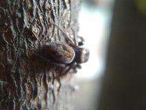 Wood spindel arkivbild