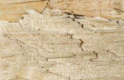 A WOOD SPLITTED SECTION Stock Images