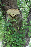Wood sponge tree. The picture shut in forest in Bulgaria Stock Image