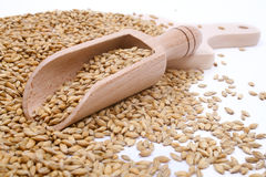 Wood spoon with whole wheat grains Royalty Free Stock Images