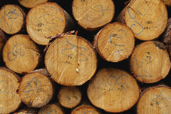 Wood stack. As a background Royalty Free Stock Images