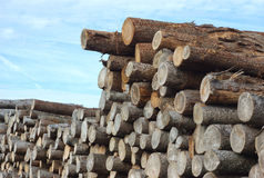 Wood stack of construction raw timber in sawmill yard Stock Photos