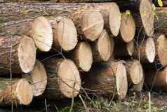 Wood stacked. Wood timbers stacked in the forrest royalty free stock photography