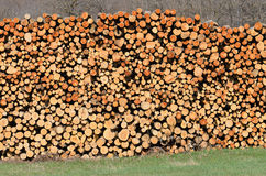 Wood stacked Royalty Free Stock Image