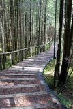 Wood stair in the forest Royalty Free Stock Photo
