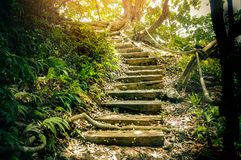 Wood stairs made from concrete, walkway in hiking path to touris. M in national park Stock Image