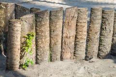 Wood staket för palmträdstam i stranden Arkivbilder