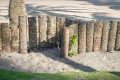 Wood staket för palmträdstam i stranden Arkivbild