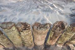 Wood staket för palmträdstam i stranden Arkivfoton
