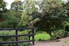 Wood staket In Nature Royaltyfria Foton