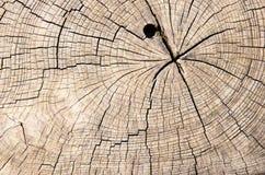 Wood stam för textursnittträd Arkivfoto