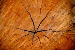 Wood stam för textursnittträd Royaltyfri Fotografi
