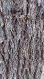 Wood stamhud Royaltyfri Foto