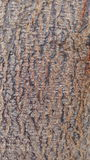 Wood stamhud Royaltyfri Fotografi