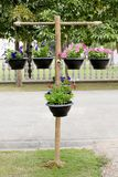 Wood stand with pots of flowers Royalty Free Stock Image