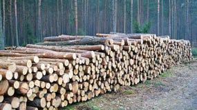 Wood staplar Fotografering för Bildbyråer