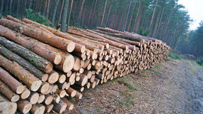 Wood staplar Royaltyfri Foto