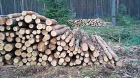 Wood staplar Royaltyfri Bild
