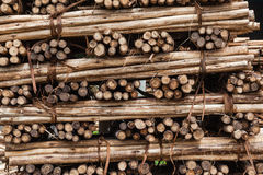 Wood staplat Poles snitt Fotografering för Bildbyråer