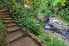 Wood Steps by  Waterfall at Sweet Creek Falls Trail. Wood Stair Steps in Sweet Creek Falls Trail Complex with Lush Greenery in Mapleton Oregon during Spring Stock Photography