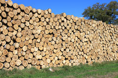 Wood. Steres for logs cut in fuel wood for renewable Stock Photos