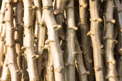 Wood stick texture Royalty Free Stock Images