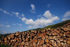 Wood stock. Big stock of wood on blue sky royalty free stock photo