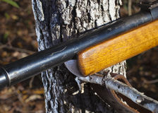 Wood stocked rifle on a branch Royalty Free Stock Image
