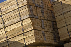 Wood stockpile Stock Image