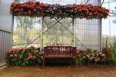 Wood stol i växthus Arkivbild