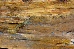 Wood stone texture Stock Images