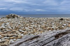 Wood on a stony beach royalty free stock images