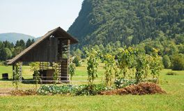 Wood Storage Building & Veg Garden Royalty Free Stock Image