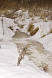 Wood stream. The wood stream has become covered by ice Stock Images