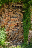 Wood strength. Tree roots grow through the brickwork, the historical part of the city of Samara. July, 2016 Royalty Free Stock Images