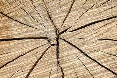 Wood structure Stock Images