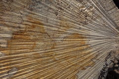 Wood structure Royalty Free Stock Photos