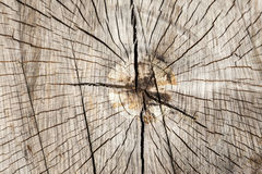 Wood structure of a round trunk Stock Photo