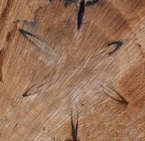 Wood structure with star-shaped pattern royalty free stock images