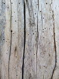 Wood structure Stock Photography