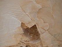 Wood struktur, södra Bohemia Fotografering för Bildbyråer