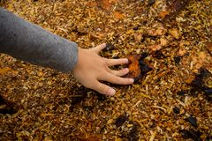 Wood stubbe med wood chiper som ligger på den Royaltyfri Fotografi