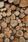 Wood stubbebakgrund för teakträ Fotografering för Bildbyråer