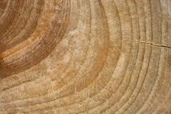 Wood stubbetextur, cutted trädstam royaltyfri fotografi