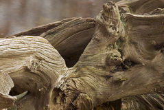 Wood stump Royalty Free Stock Photography