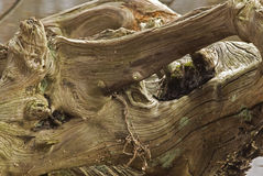 Wood stump Royalty Free Stock Image